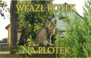 Wlazł kotek na płotek PDF obrazkowe nuty dla dzieci